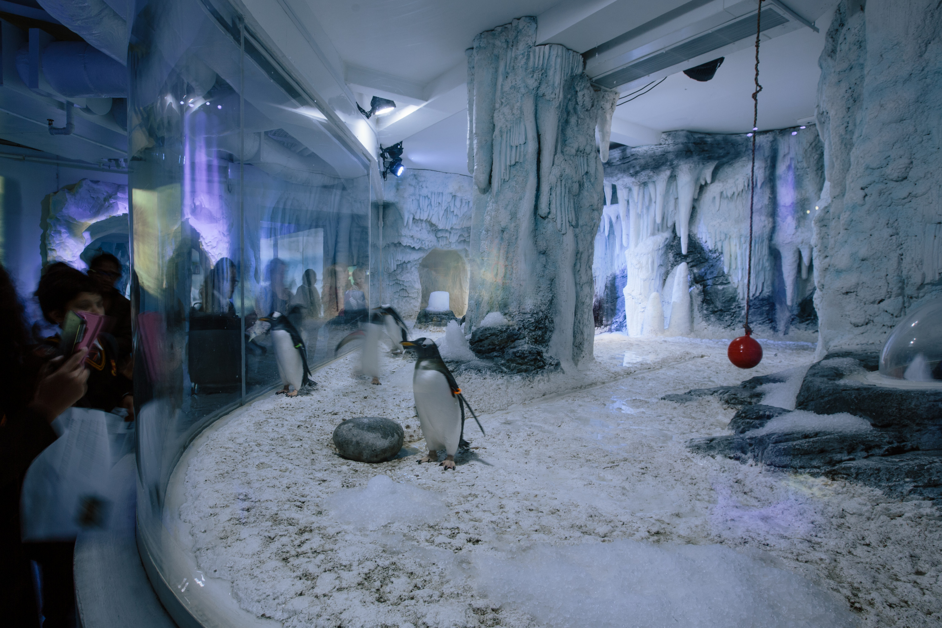"SEA LIFE London setzt auf Cameo FLAT PRO-Serie im ""Penguin Point"""